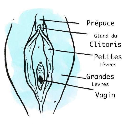 clito 2